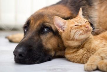 A Siena un counselling comportamentale per i proprietari di animali da compagnia