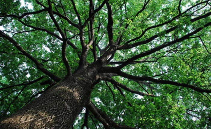 Salvare e piantare gli alberi per salvare l'aria, l'acqua, la bellezza (e i soldi)