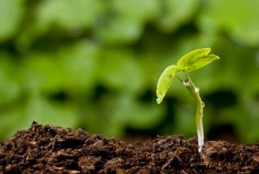 Montalcino: l'agricoltura di precisione nel progetto Oenosmart