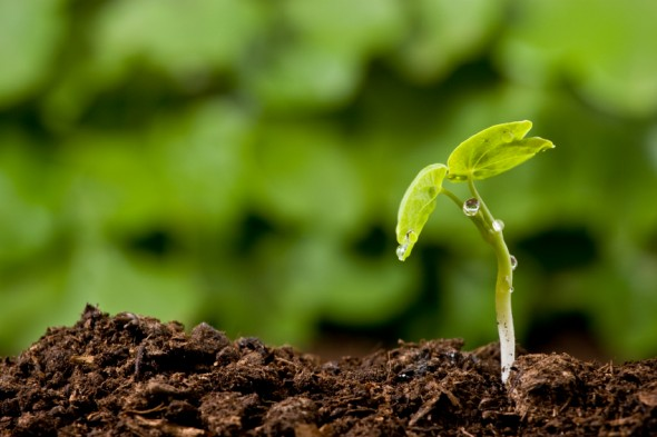 Ricambi generazionali in agricoltura: convegno per chiarire i profili fiscali