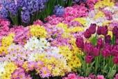 Tornano piante e fiori al mercato di via Maccari