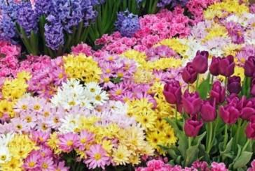 Alla fontana di San Prospero torna la Mostra Mercato di piante e fiori