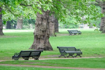 Gestione del verde pubblico,  un seminario di Legambiente per tutti