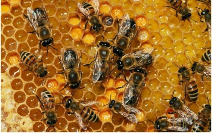"""Coldiretti: """"La stagione sconvolge le api: -70% miele"""""""