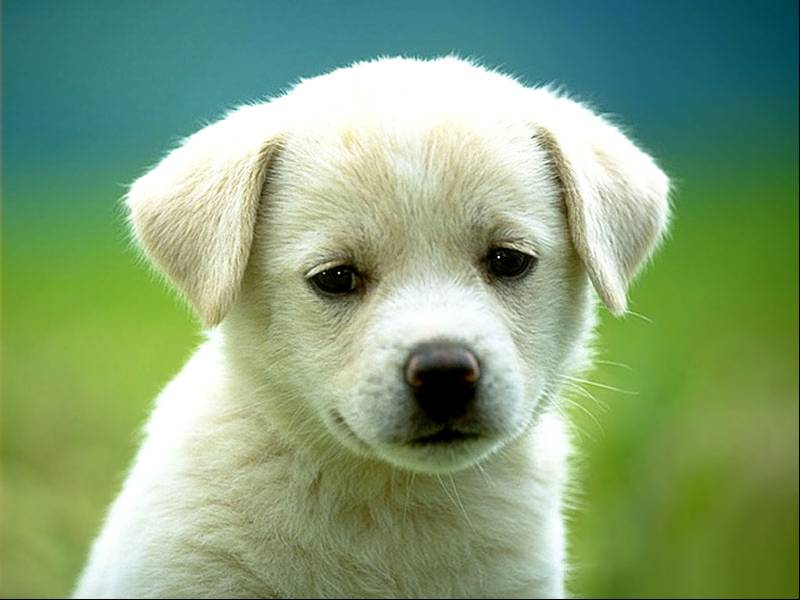 Il 26 maggio ad Asciano torna la Festa del cane