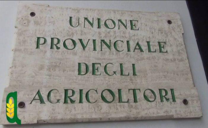 """Nasce il premio """"Terra di Siena"""" dell'Upa"""
