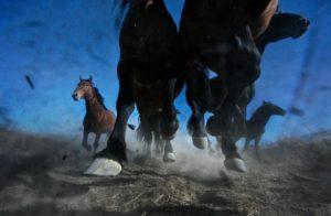 ┬®MelissaFarlow_Thundering Mustangs