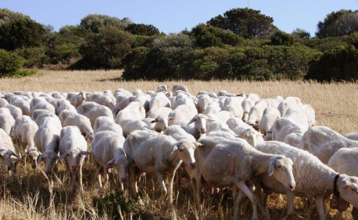 Latte ovi-caprino: aperto il bando per il rilancio del comparto