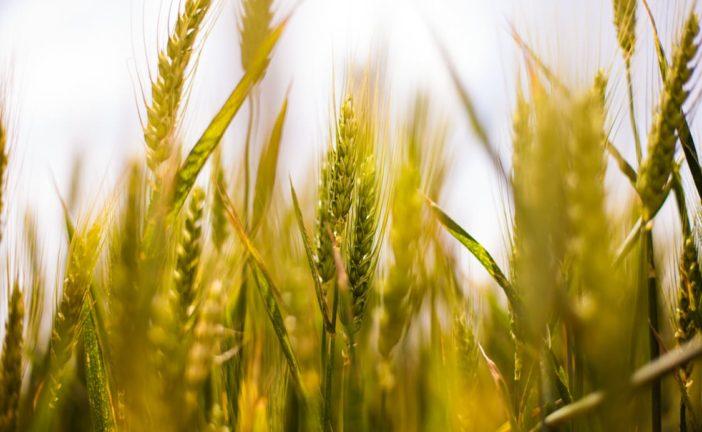 Toscana: aumentano le imprese agricole