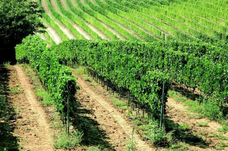 In arrivo quasi 2 milioni di euro per la viticoltura