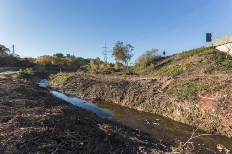 Vegetazione riparia: l'allarme delle associazioni ambientaliste