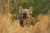 """Cerretani: """"Fauna selvatica: risorsa o dramma?"""""""