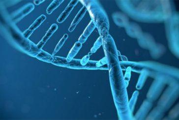 La terapia genica nella medicina oggi. Incontro in Rettorato