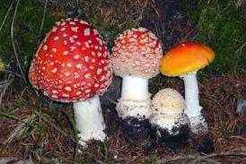 Funghi in mostra all'Accademia dei Fisiocritici