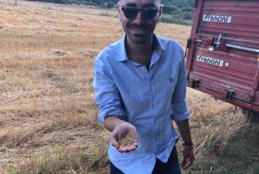 I grani antichi di Siena diventano un progetto imprenditoriale
