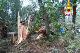 """Mati (Confagricoltura): """"Gli alberi cadono per la mancata cura non per il maltempo"""""""