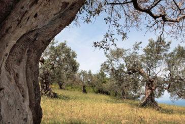 Esperienza outdoor con la Camminata tra gli olivia Siena