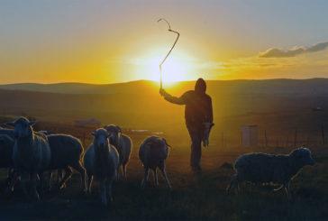 Toscana: pastori sul piede di guerra