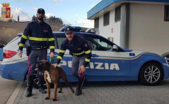 La Polizia trova Quarzo, un boxer a zonzo sull'Autopalio