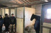 Progetto sui cavalli da Palio: visita alla clinica Il Ceppo