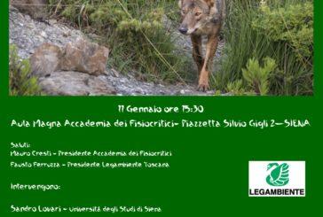 Legambiente organizza un incontro per parlare del lupo