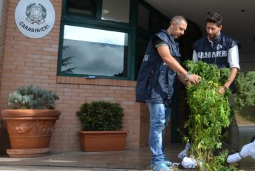 Coltivano marijuana in casa: arrestati 2 fratelli