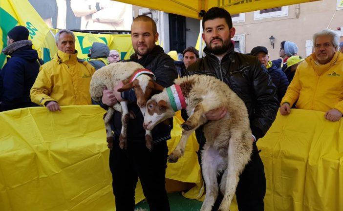 Tragedia dei pastori sardi, Coldiretti chiede rispetto