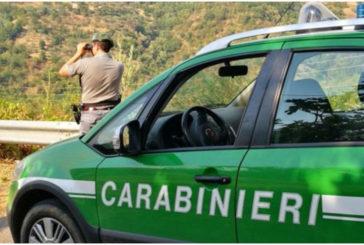I Carabinieri Forestali controllano i cantieri boschivi