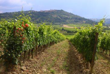 """""""Sentieri natura in Terre di Siena"""": guida per chi ama passeggiate e trekking"""