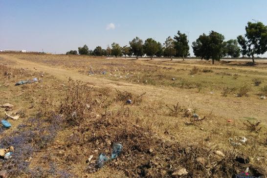 Toscana: 500mila ettari di superficie agricola in abbandono