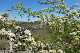 Pasquetta in Lauretana: trekking nel cuore delle Crete senesi