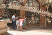 """""""Museo e Giardino – Scopro e osservo da vicino"""": un campus dei Fisiocritici"""