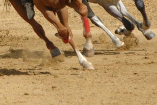 Palio: approvato il protocollo per l'addestramento dei cavalli