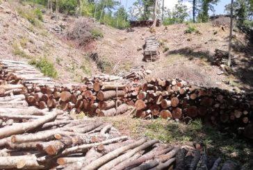 """""""Ancora tagli boschivi nella riserva naturale Farma"""""""