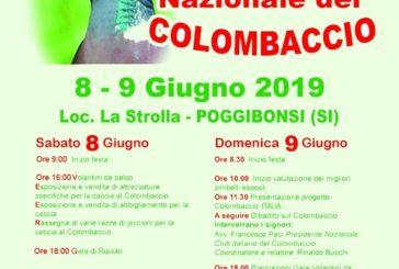 Dodicesima Festa del Colombaccio a Poggibonsi