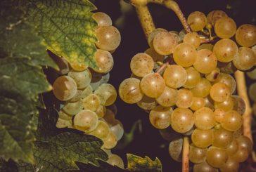 Friuli terra di vini: in Italia e nel mondo le eccellenze sono apprezzate ovunque
