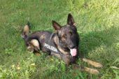 """La Polizia a """"La Fattoria in Fortezza"""" con i cani"""