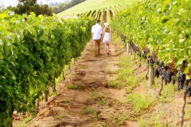 Il Movimento Turismo del vino presenta le iniziative del 2020