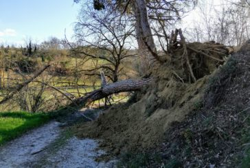 Colle: il terrore corre sulla strada tra i pini