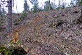 Taglio del bosco sulla Montagnola: Grig vuol vedere le autorizzazioni