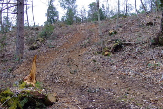 Indagini dei Carabinieri Forestali sul pesante taglio dei boschi della Montagnola Senese
