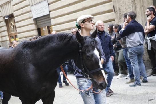 Palio straordinario: l'assegnazione dei cavalli