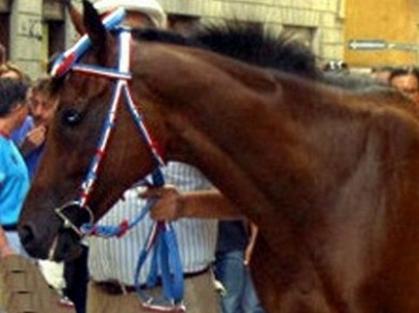Palio: sono 193 i cavalli iscritti alle previsite