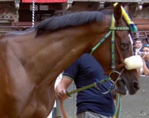 25 cavalli impegnati a Mociano