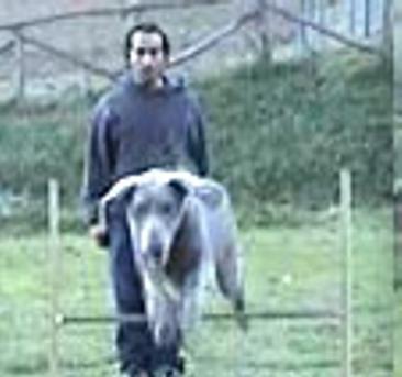 A Sinalunga c'è un corso per allievi istruttori di cani