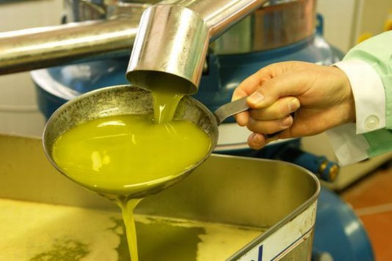 Magazzini pieni di olio straniero: crolla l'extravergine italiano