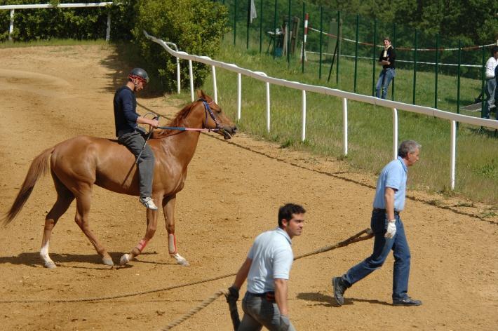 Palio: dal 27 febbraio le iscrizioni dei proprietari e dei cavalli