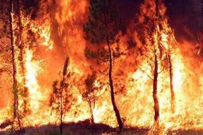 Incendi boschivi: il bilancio della stagione estiva