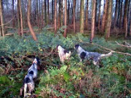 Economie rurali, caccia e fauna selvatica. Interrogazione di Marchetti