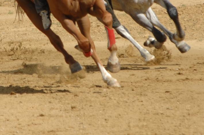 Palio: nuovo calendario delle corse e dei lavori  di addestramento
